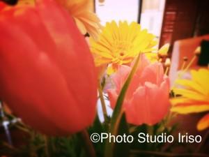 ©Photo Studio Iriso